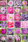 A collage of pink and purple colors, vertical, A3. Collection of flowers in purple colors, A3 format, 24 element stock image