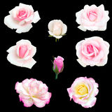 Collage of pink roses Royalty Free Stock Photo