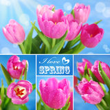 Collage with pink tulips and text Royalty Free Stock Images