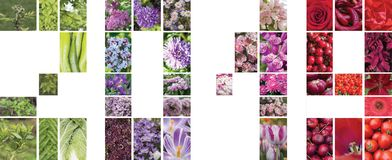 Collage of plants  in the form of figures 2019. Collage of flowers, plants and fruits in the form of figures 2019. Green, violet, pink and red Royalty Free Stock Photos