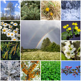 Collage with plants Royalty Free Stock Image