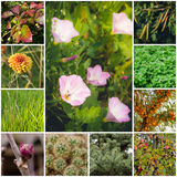Collage with plants. A collage of 11 photos of various plants. In the centre and flowering creepers Royalty Free Stock Photography