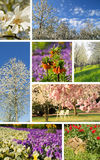 Collage plants in spring Stock Images