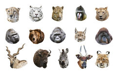 Collage of portraits of wild mammals Royalty Free Stock Images
