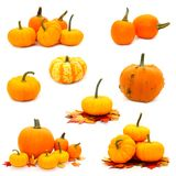 Collage of pumpkins Stock Photos