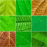 Collage quadrato delle foglie verdi - modello senza cuciture Fotografia Stock Libera da Diritti