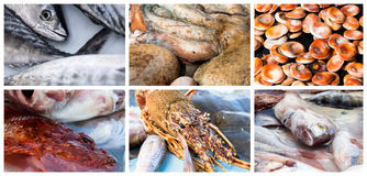 Collage of raw seafood. Close-up of lobster, octopus, redfish, mackerel and mussel Stock Photography