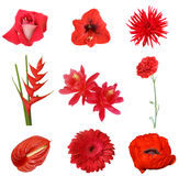 Collage of red flowers on a white background. Isolated Stock Photo