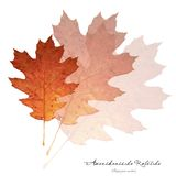Collage with red oak leaves Royalty Free Stock Photo