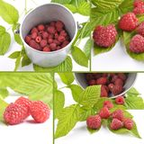 Collage red raspberries with tin bucket and leaves on white. Colorful and crisp image of collage red raspberries with tin bucket and leaves on white Royalty Free Stock Image