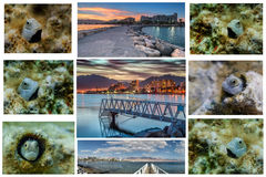 Collage from the Red Sea Stock Image