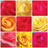 Collage with roses. Collage with red and yellow roses Royalty Free Stock Photography