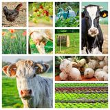 Collage représentant plusieurs animaux et terres cultivables de ferme Photographie stock libre de droits