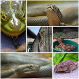 Collage with reptiles and amphibians