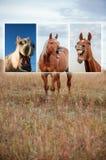 Collage riant de cheval photo libre de droits
