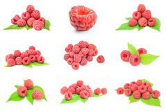 Collage of ripe raspberries over a white background. Set of rasp berry isolated on a white background with clipping path Stock Photography