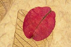 Collage rose de pétale Images libres de droits