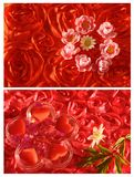 Collage with rose and flower Stock Image