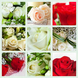 Collage of roses Stock Photography