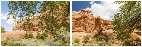 Collage rosso asciutto degli alberi delle colline del paese del deserto Immagine Stock Libera da Diritti