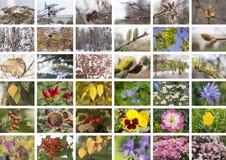Collage säsongerna arkivbilder