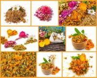 Collage sano de la vida Rose, manzanilla, maravilla Imagen de archivo libre de regalías