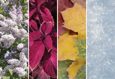 Collage of scenes of the four seasons royalty free stock image