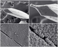 Collage scientifique Photo du microscope électronique photographie stock