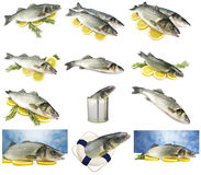 Collage of sea bass. Close up on spice stock images