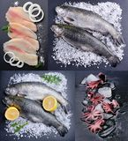 Collage of sea product. stock photos