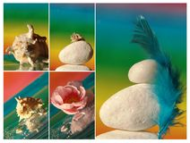 Collage with sea shell, flower and feather Stock Photos