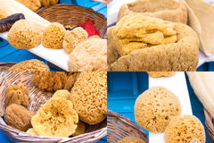 Collage of sea sponges Stock Photo