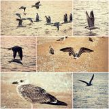 Collage of seagulls on a sea coast set of toned images Royalty Free Stock Photo