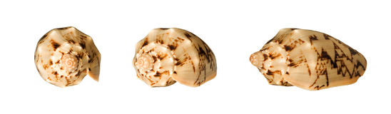 Collage with seashells Stock Photography