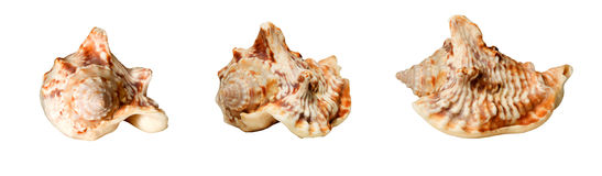 Collage with seashells Stock Photos