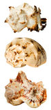 Collage with seashells Royalty Free Stock Image