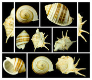 Collage with seashells Royalty Free Stock Photography