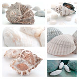 Collage of seashells Stock Image