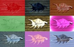 Collage of seashells treated with different color filters. Close up royalty free illustration
