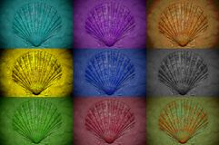 Collage of seashells treated with different color filters. Close up stock photography