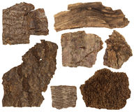 Collage set of dried bark and parts of pine tree trunk isolated. On white background royalty free stock photo