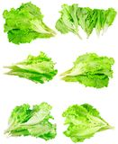 Collage (set) of fresh Leaf of lettuce . Isolated Royalty Free Stock Image