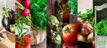 Collage set fresh organic vegetables herbs. Ripe tomatoes, radish, green beans, artichokes, thyme, parsley, egglants. Summer, autumn fall harvest, farmer`s Royalty Free Stock Photo
