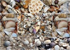 Collage of shells washed up on the  sandy shore at Hutt's beach near Bunbury western Australia on a fine sunny winter morning. Royalty Free Stock Photos