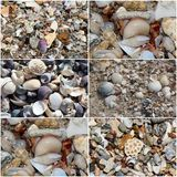 Collage of shells washed up on the  sandy shore at Hutt's beach near Bunbury western Australia on a fine sunny winter morning. Stock Image