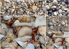 Collage of shells washed up on the  sandy shore at Hutt's beach near Bunbury western Australia on a fine sunny winter morning. Stock Images