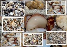 Collage of shells washed up on the  sandy shore at Hutt's beach near Bunbury western Australia  Royalty Free Stock Photo