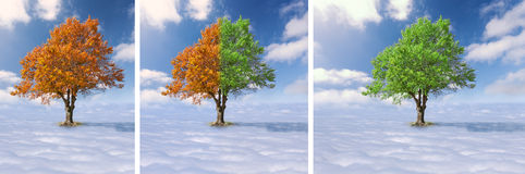 Collage - Single tree above the clouds Royalty Free Stock Image