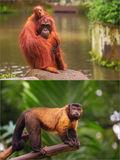 Collage of small monkeys sitting on a tree. Royalty Free Stock Image