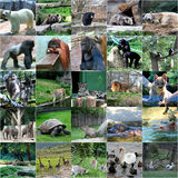 Collage of some wild animals. In zoo Royalty Free Stock Photos